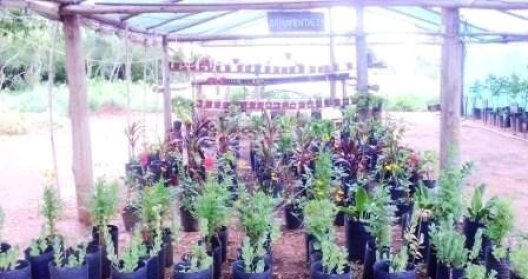 Vivero municipal de plantas nativas de mburucuy for Vivero plantas nativas
