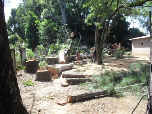 El ministerio de salud autorizo la tala de rboles del for Cementerio jardin de paz pilar
