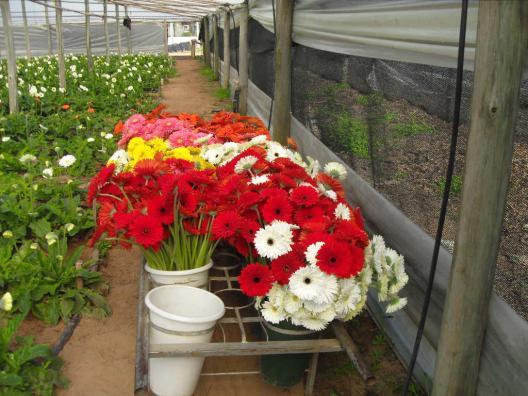 T cnicos de sanidad vegetal visitaron viveros forestales y for Viveros ornamentales
