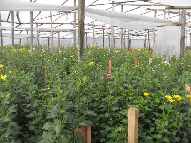 Floricultores de santa rosa en plena tarea 21 for Cementerio jardin de paz pilar